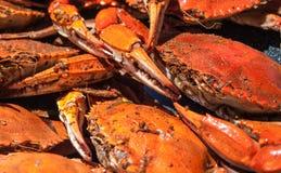 Ångade blåa krabbor från Chesapeakefjärden Royaltyfria Foton