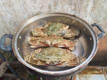 Ångade krabbor Royaltyfri Bild