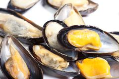 Ångade musslor Royaltyfria Bilder