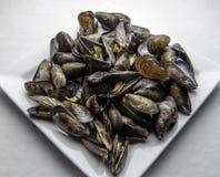 Ångade musslor Arkivbild
