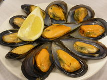 ångade musslor royaltyfri foto