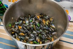 Ångade musslor i en krus Arkivbilder