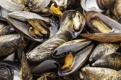 Ångade musslor tätt upp Arkivfoto