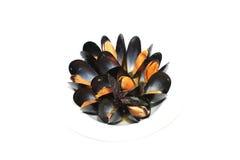 Ångade nya musslor Fotografering för Bildbyråer