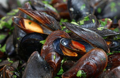 Ångade och grillade musslor tätt upp Royaltyfria Foton