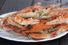 ÅngaDungeness krabba Arkivfoton