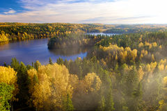 Ångande skog Arkivfoto