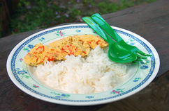 Ångat ägg och lagade mat ris royaltyfria bilder