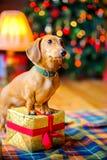 År av hunden Royaltyfri Bild