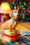 År av hunden Royaltyfri Foto