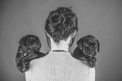 År av hunden, ferieberöm Royaltyfria Bilder