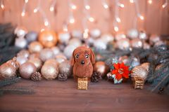 År av hunden på horoskopet, julpynt Royaltyfri Foto