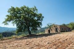 Århundrade-gammalt hus med hundra åriga träd i vetefältet Arkivfoton