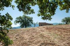 Århundrade-gammalt hus med hundra åriga träd i vetefältet Arkivbild