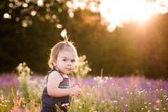 Årig flicka för unge i ett purpurfärgat blommafält Fotografering för Bildbyråer