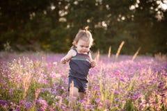 Årig flicka för unge i ett purpurfärgat blommafält Royaltyfri Fotografi