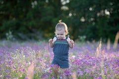 Årig flicka för unge i ett purpurfärgat blommafält Royaltyfria Foton