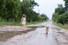 Årig flicka som gulliga fyra promenerar den våta brutna vägen efter regnet som medföljs av hennes husdjur, bygd Arkivbild