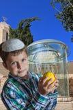 Årig pojke gulliga sju på de guld- menororna Royaltyfri Foto