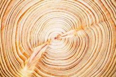 Åriga cirklar bakgrund, Cedar Lebanese för Wood textur Arkivbilder