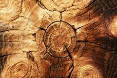 årliga cirklar Arkivbild