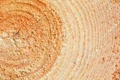 Årliga cirklar på sågat sörjer trädträ Arkivbilder