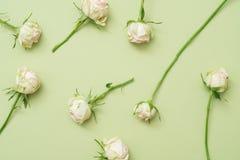 Årsdagen sorterade grön bakgrund för vita rosor royaltyfria bilder