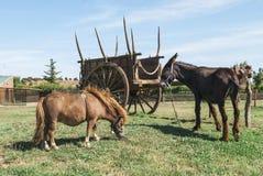 Åsna och ponny i en lantgård Royaltyfri Foto