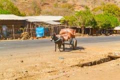 Åsna och vagnen i Etiopien Arkivbild