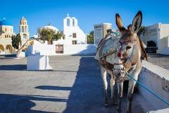 Åsna på bakgrunden av den Oia gatan på ön av Santorini arkivfoto