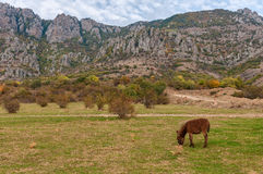 Åsna som betar på gräset vid det Demerji berget, Krim arkivbilder