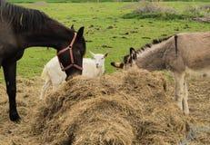 Åsna, tegelsten och häst vid höbalen royaltyfri fotografi