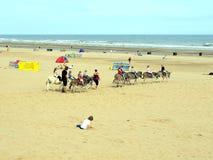 Åsnaritter på den Mablethorpe stranden. Royaltyfri Foto