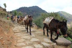 Åsnaslinga på den trekking rutten Royaltyfri Fotografi