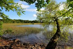 The Ã…snen-See, Swedens new Nationalpark. The Ã…snen-See, Swedens new Nationalpark in aun royalty free stock photography
