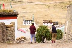 Åsnor bär en börda av gröna ärtor i en by royaltyfri fotografi