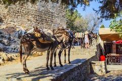 Åsnor för transportering av punkt för folk upptill av akropolen av Lindos Rhodes ö, Grekland arkivbilder