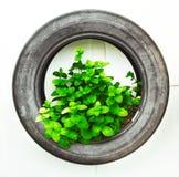 Återanvänd av gummihjulet som används i organisk grönsak Arkivfoto