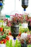 Återanvänd plast- flaskor som blomkrukor arkivfoto