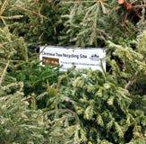 Återanvända julgranar Arkivbild