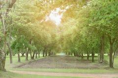 Återbeskogning för hållbar utveckling Fotografering för Bildbyråer