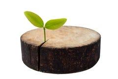 Återbeskogning- och beskyddidé som ett miljö- begrepp med skärbrädan och växten Fotografering för Bildbyråer