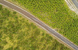 Återbeskogningjämförelse flyg- Cotopaxi Ecuador royaltyfria foton