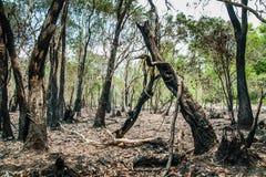 Återställa djungeln Fotografering för Bildbyråer