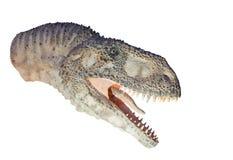 Återställande av en isolerad dinosaurie för Abelisaurus (Abelisauruscomahuensis) Arkivfoto