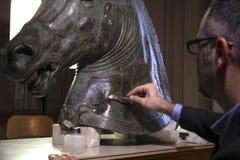 Återställande av hästen Fotografering för Bildbyråer
