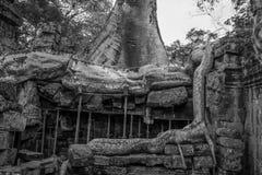 Återställande i tempel för Ta Prohm Royaltyfri Bild