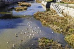 Återställning av faunor i en flod royaltyfri foto