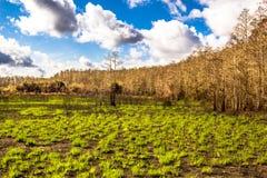 Återväxtskogen efter avfyrar Arkivbilder