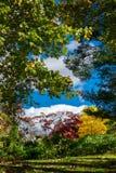 Åtsittande skörd av träd och buskar som visar deras mångfärgade nedgånglövverk, framme av en härlig blå himmel och vit arkivbild